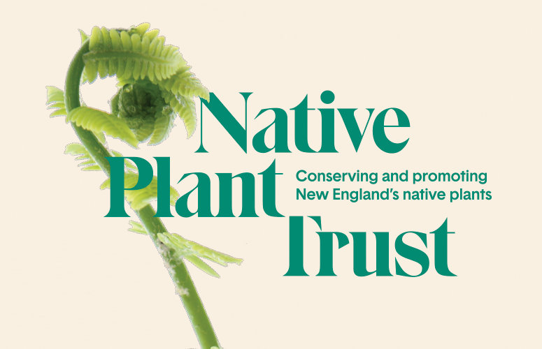 Native Plant Trust: Conserving and Promoting New England's         Native Plants